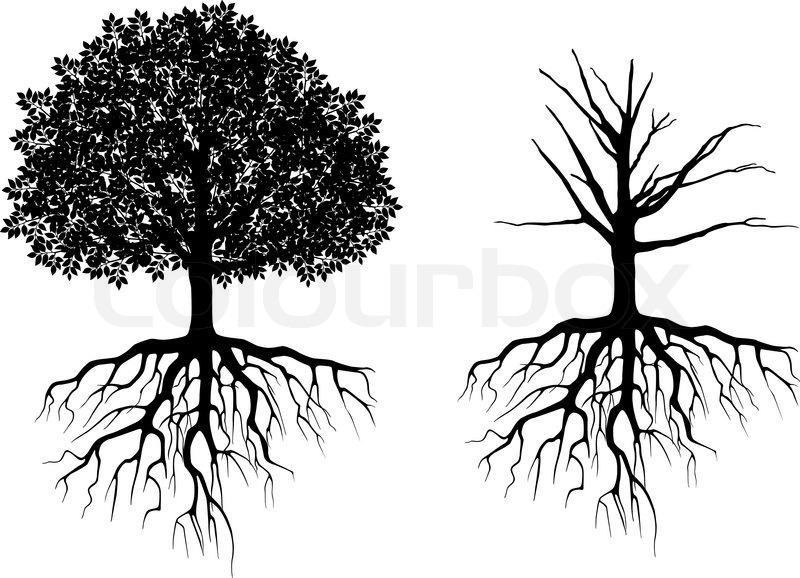 Tree With Roots Stock Vector Colourbox