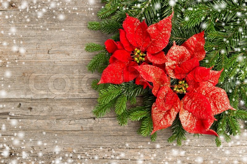 Beautiful christmas tree branch with red poinsettia flower