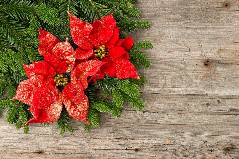 sch nen weihnachtsbaum zweig mit roten weihnachtsstern blume auf holzuntergrund stockfoto. Black Bedroom Furniture Sets. Home Design Ideas