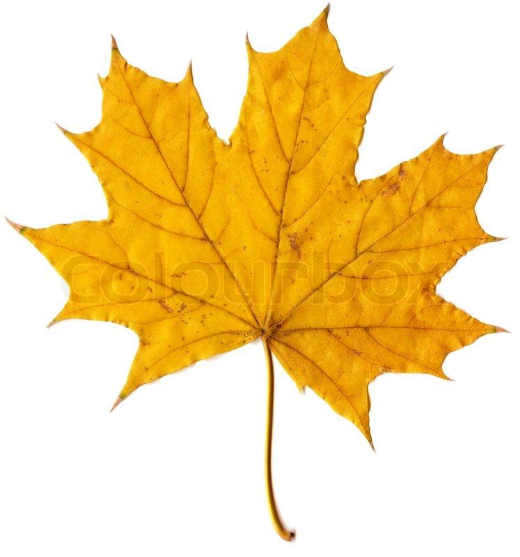Autumn Leaf Drawings
