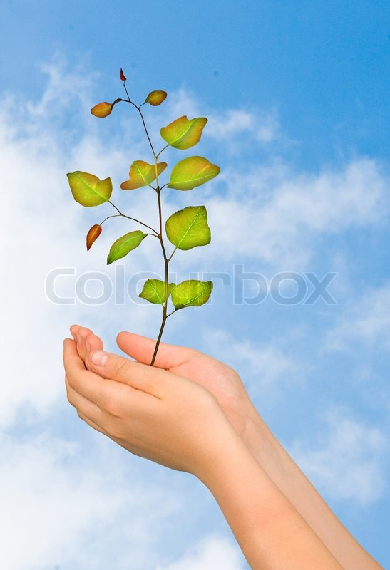Sapling in palms as a symbol of nature protection, stock photo