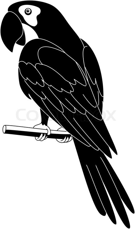 parrot  black silhouette stock vector colourbox macaw clipart macaw clip art free