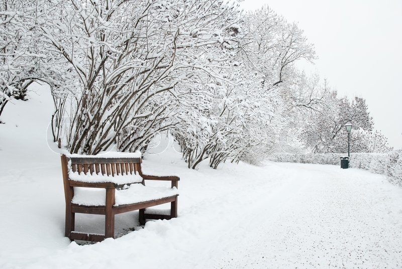 Park bench and trees covered by heavy snow | Stock Photo ...