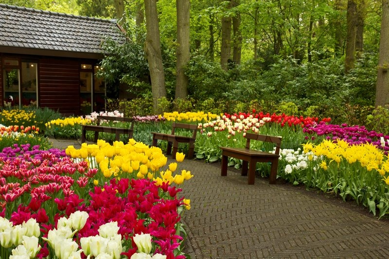 spring garden keukenhof holland stock photo colourbox
