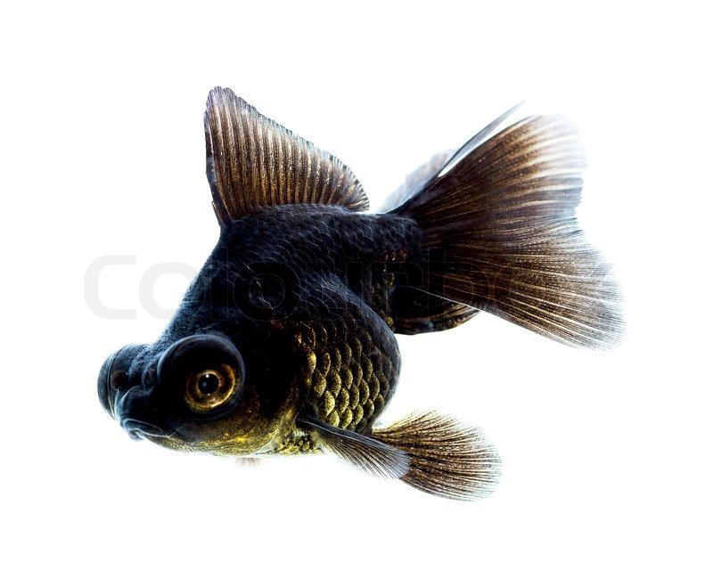 hintergrundbilder fisch schwarzer hintergrund - photo #5