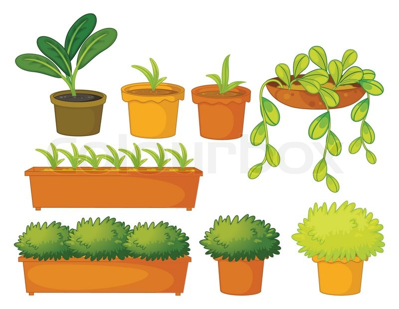 Various plants and pots Stock Vector Colourbox