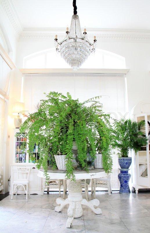 Luxus- Interieur in Wohnzimmer mit Grünpflanzen | Stockfoto | Colourbox