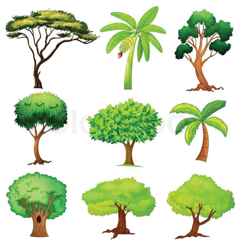 forskellige træer