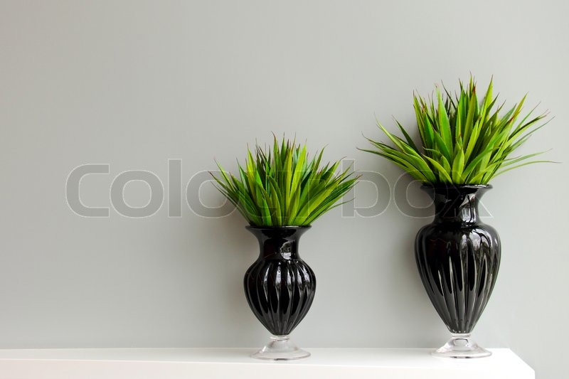 gr ne pflanzen in schwarzer vase f r zimmer dekoriert stockfoto colourbox. Black Bedroom Furniture Sets. Home Design Ideas