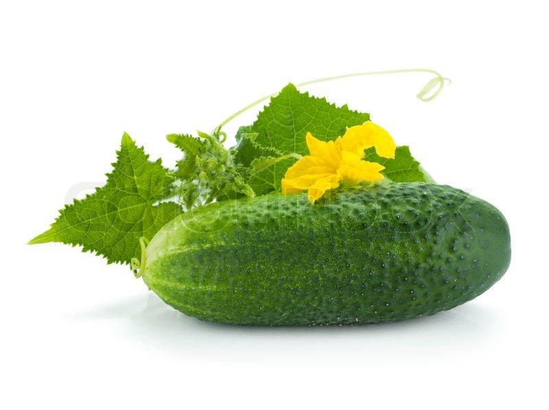 agurk frugt