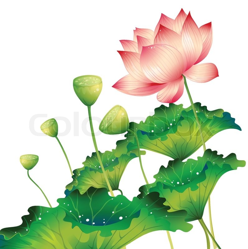 Oriental lotus flower isolated with lotus leaf vector colourbox