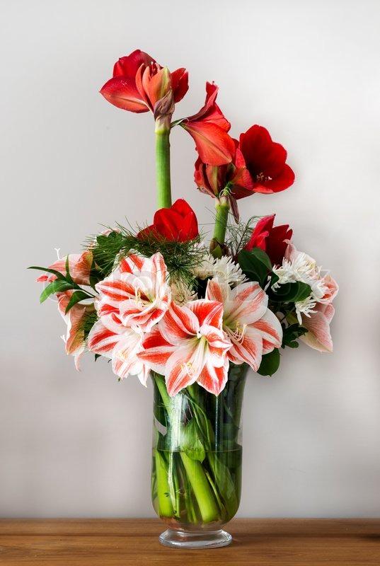 Bouquet with amaryllis stock photo colourbox for Bouquet amaryllis