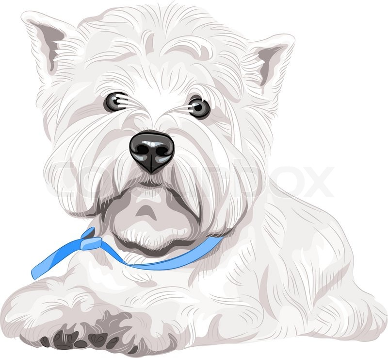 Vector Serious Dog West Highland White Terrier Breed