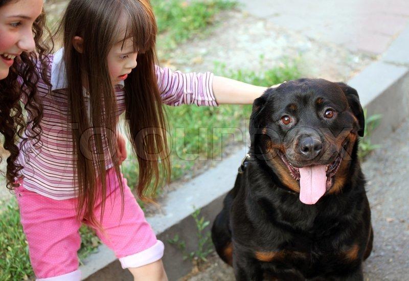stor sort hund