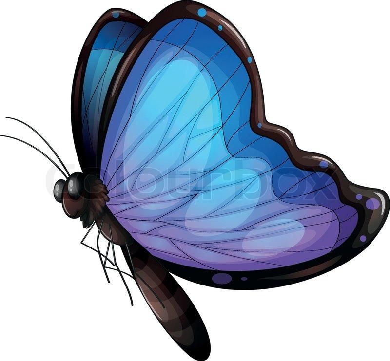 Ein Schmetterling | Vektorgrafik | Colourbox