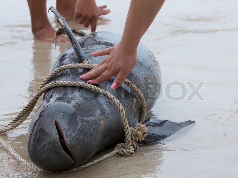 dolphin free