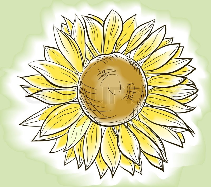 Flower sunflower painted imitating watercolor, vector