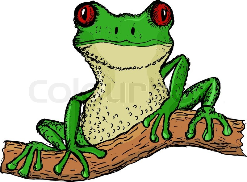 hand drawn  vector  cartoon illustration of tree frog rainforest animals clipart black and white tropical rainforest animals clipart