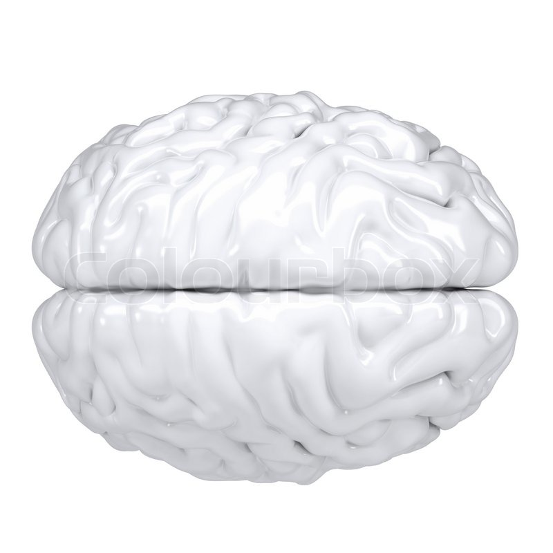 Human Brain Black And White 3d White Human Brain View From Above Stock Photo