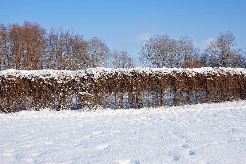 fence von getrockneten lianen pflanzen im winter park stockfoto colourbox. Black Bedroom Furniture Sets. Home Design Ideas