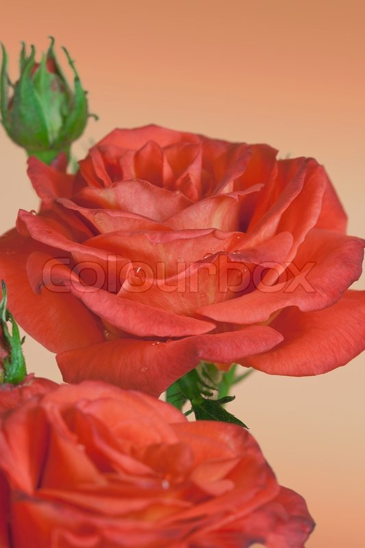 Flowers art design Valentine day holiday card, stock photo