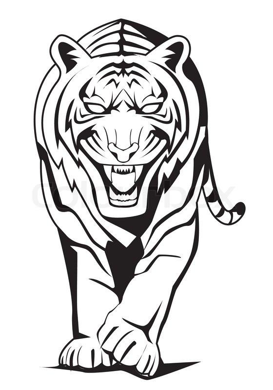 tiger walk stock vector colourbox