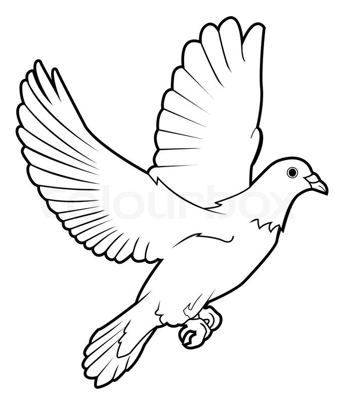 Line Art Dove : Dove peace stock vector colourbox