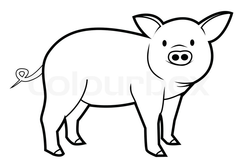 Line Drawing Pig : Pig stock vector colourbox
