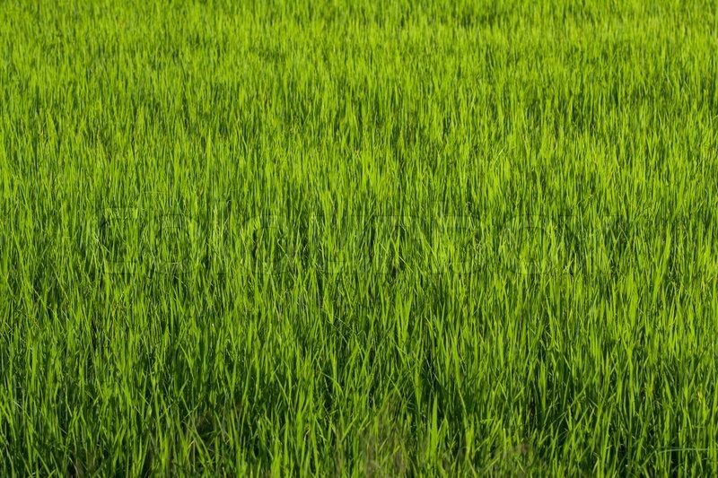 grass field texture90 field