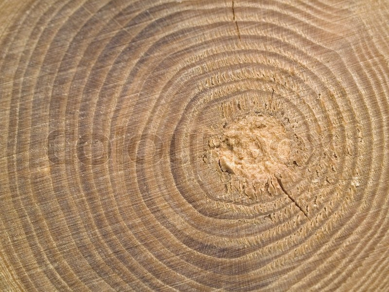 Tree Stump Rings Stock Photo Colourbox