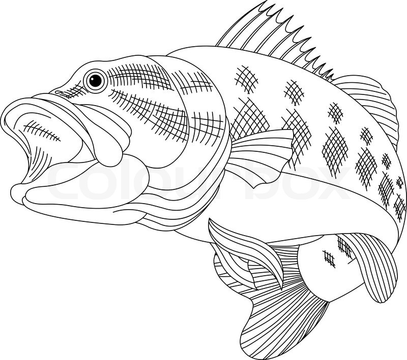 sea bass coloring pages - photo#25