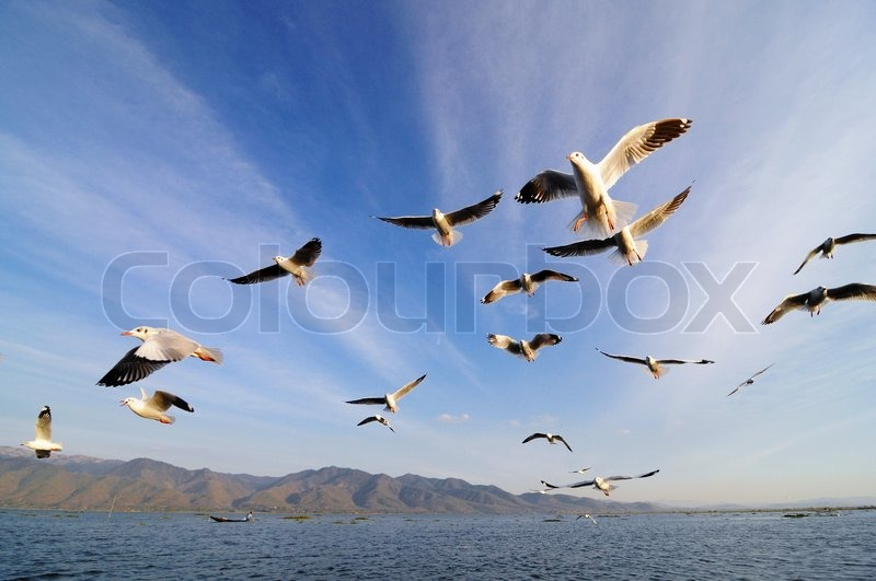 Stock image of 'Flying birds in blue sky'