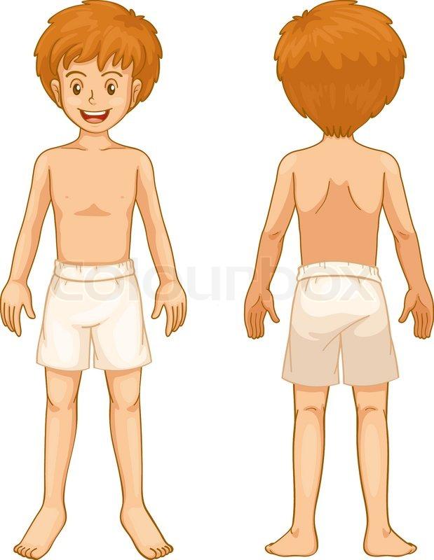 Male human anatomy   Stock Vector   Colourbox