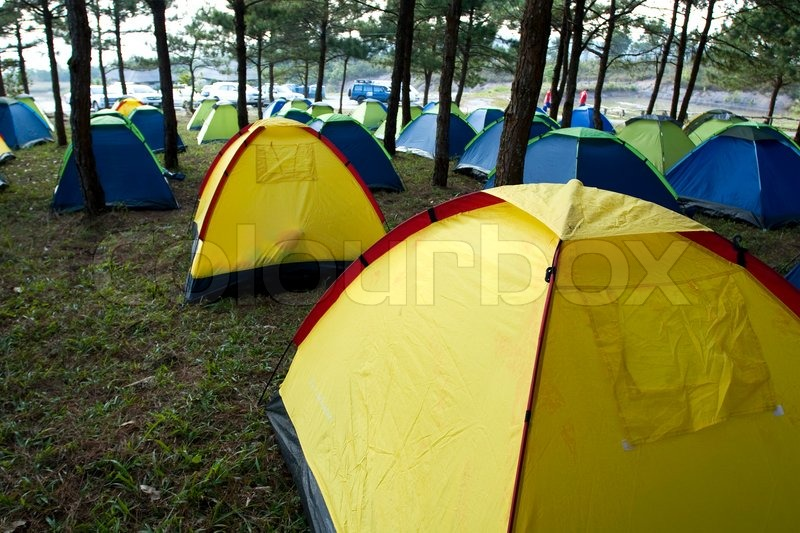 A group of tents in the pine forest stock photo & A group of tents in the pine forest | Stock Photo | Colourbox