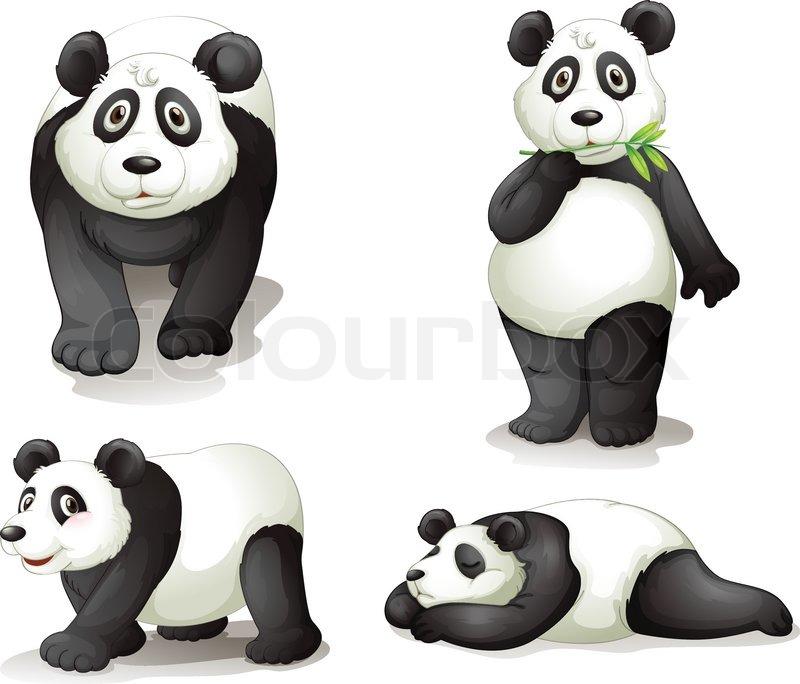 Chinese Panda Vector a Panda Vector