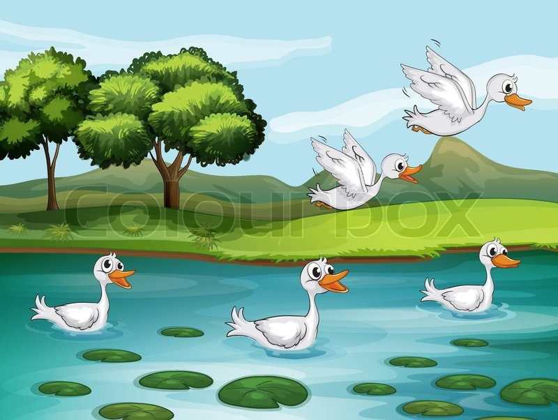 5827589 ducks and water