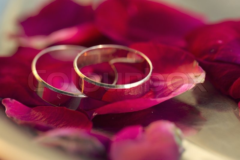Wedding rings and roses petals Stock Photo Colourbox