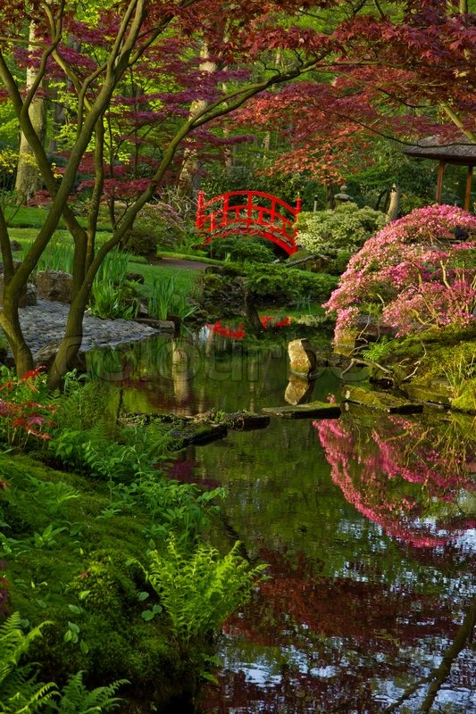 Japanese Garden With Red Bridge, Den Haag, Holland