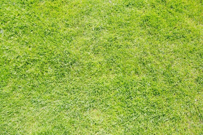 Grass Field Texture Intended Green Grass Texture From Field Stock Photo Colourbox