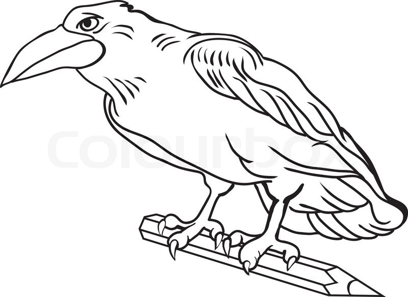 Contour Line Drawing Bird : Contour drawing crow bird holds a pencil stock vector