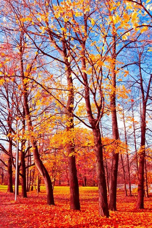 Forest Landscape Fall Wallpaper Stock Photo Colourbox