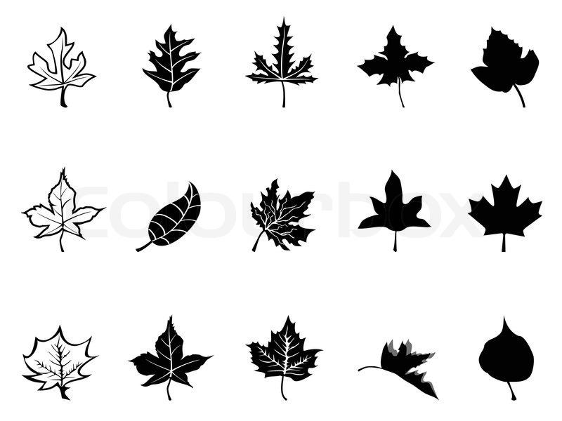 Black Maple Leaves Silhouette Stock Vector Colourbox