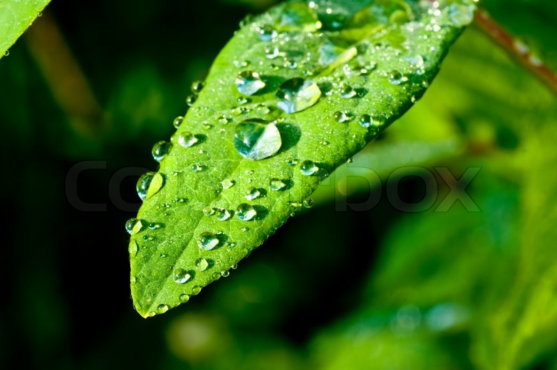 Raindrops On Leaf Stock Photo Colourbox