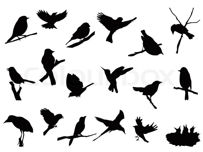 Vogel -Silhouetten Sammlung | Vektorgrafik | Colourbox