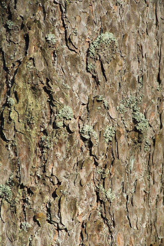 Structure of a bark of a tree, stock photo