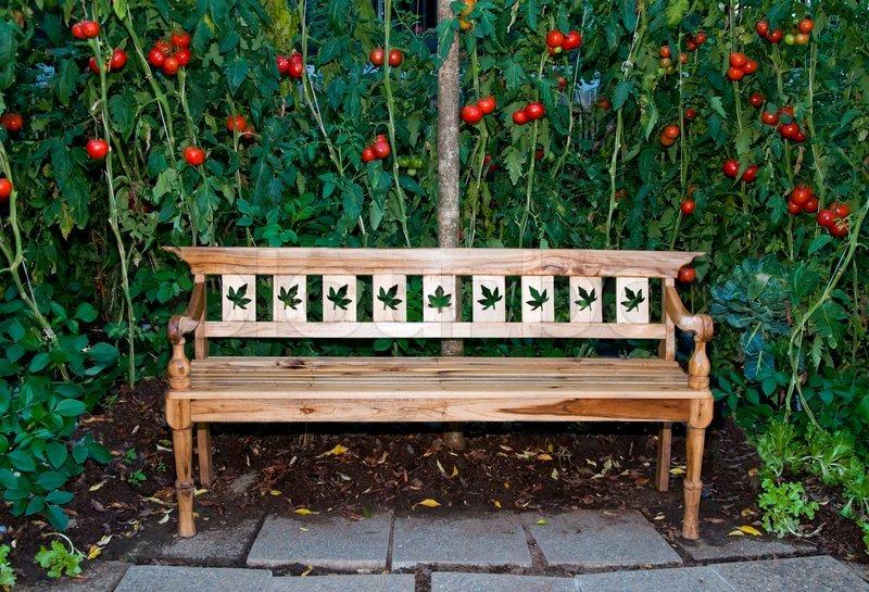 The wooden bench on tomato garden background stock photo for Wooden studios for gardens
