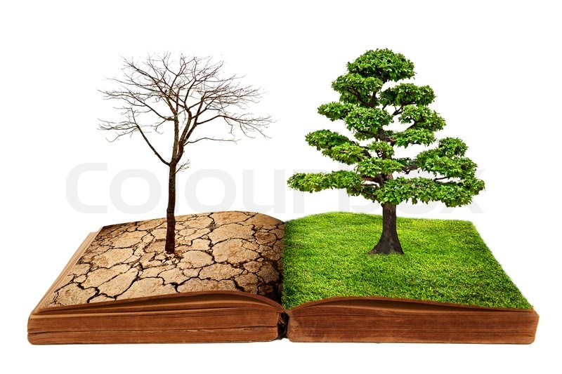 the big tree growth from a book isolated on white