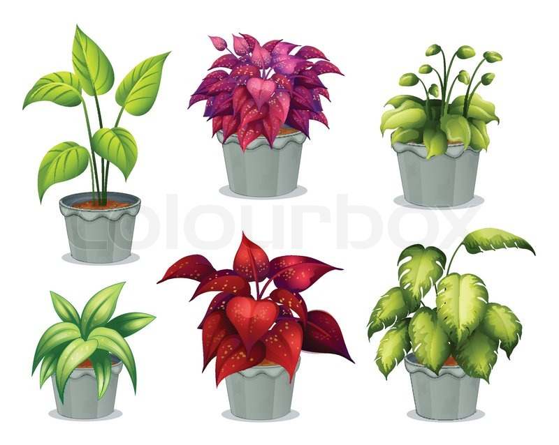 Six non flowering plants stock vector colourbox for Plantas ornamentales sin flores