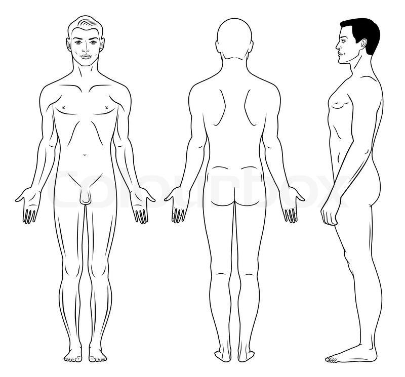Fantastisch Menschliche Körper Anatomie Für Kinder Bilder - Anatomie ...