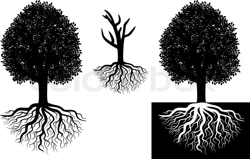 isolated tree with roots stock vector colourbox rh colourbox com tree with roots silhouette vector tree with roots vector free download